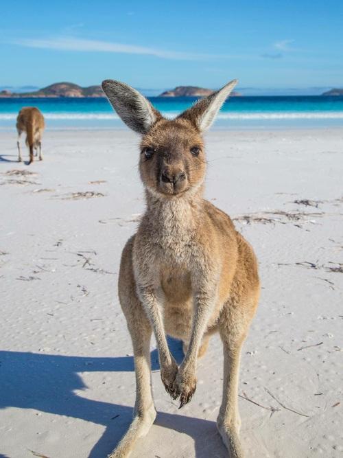 Une expatriée enAustralie.